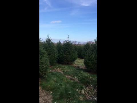 Wandering around Unagnst Tree Farm