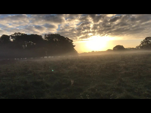 Sunrise in Bushy Park III